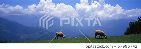 牧場綿羊和山脈雲層 67996742