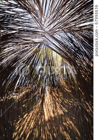 竹子建築物內部的自然光 67998636