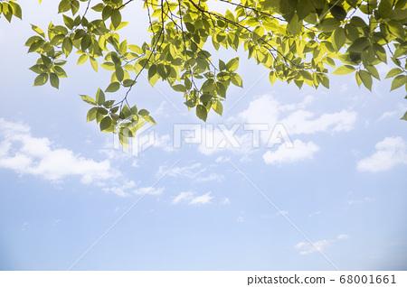하늘과 나무잎 배경 68001661