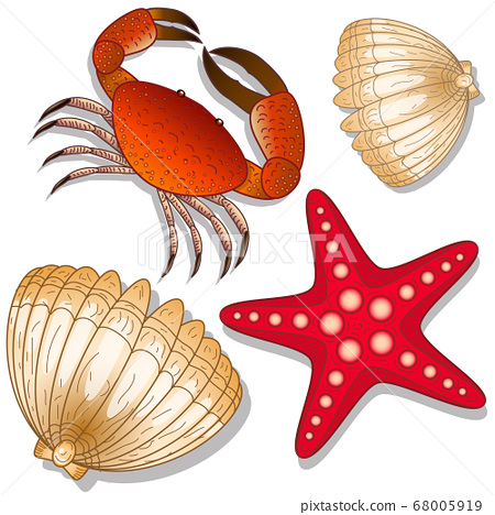 Set of marine inhabitants. Crab, starfish and shell. White background. Isolated objects 68005919
