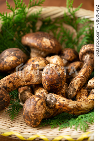 漏勺松茸蘑菇 68006492