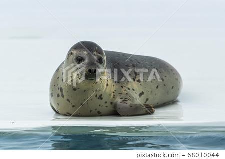 山形縣鶴岡市高馬夫海豹水族館的風景 68010044