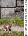 貓,路貓 68012128