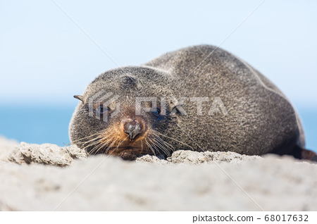 Seal 68017632