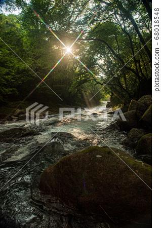 초여름의 청류 기쿠치 계곡에 폭포의 풍경 68018548