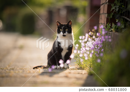 cat on the sidewalk 68031800