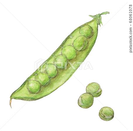 沙耶水彩的綠豆彩色鉛筆素描 68061078