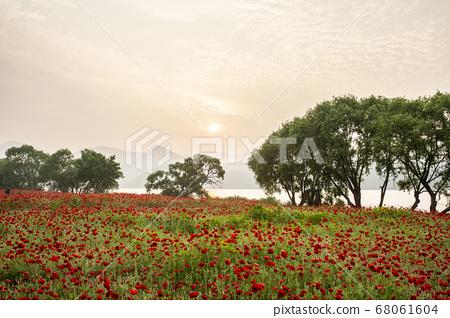 남양주 양귀비 꽃이 아름다운 물의 정원 68061604