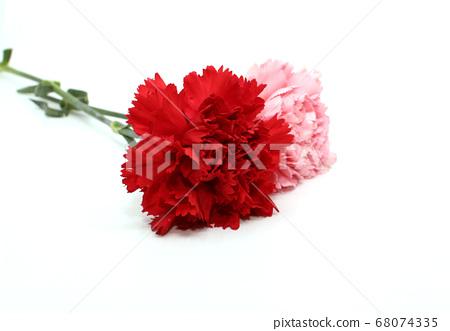 분홍색 카네이션과 빨간색 카네이션 68074335