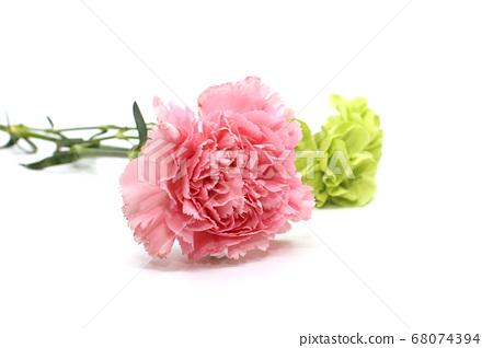 분홍색 카네이션과 초록색 카네이션 68074394