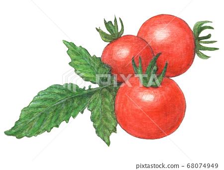 水彩彩色的鉛筆素描與光滑的櫻桃番茄的葉子 68074949