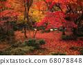 Autumn leaves carpet (Enkoji Temple, Kyoto) 68078848