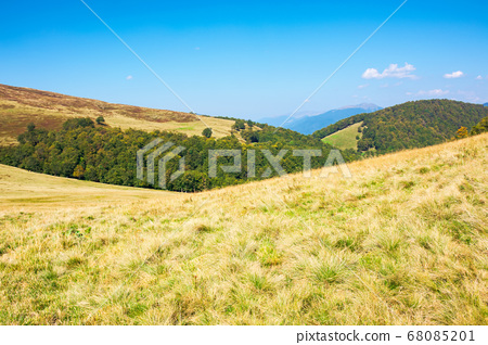 grassy meadow in mountains. beautiful landscape of 68085201