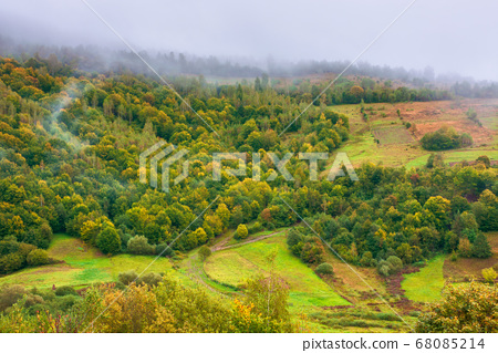 forest on mountain in mist at sunrise 68085214