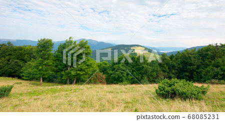 primeval beech forest in mountains. mountain 68085231