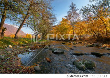 river in the forest. water stream among the 68085243