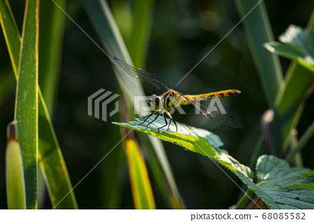 한국의 곤충 68085582
