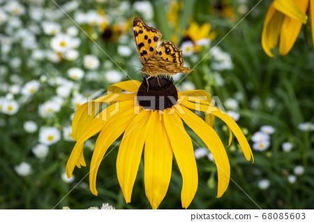 한국의 곤충 68085603