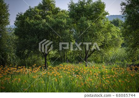 한국의 들꽃 68085744