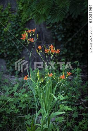 한국의 들꽃 68085964