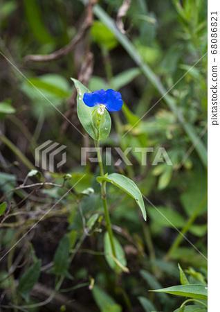 Korean wildflowers 68086821