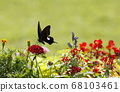 Summer flowers and monarch swallowtail butterfly 68103461