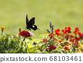 夏季花卉和帝王蝶燕尾蝴蝶 68103461
