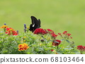 Summer flowers and monarch swallowtail butterfly 68103464