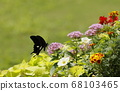 Summer flowers and monarch swallowtail butterfly 68103465
