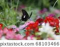 夏季花卉和帝王蝶燕尾蝴蝶 68103466