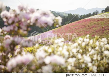벚꽃 너머의 다년초 68103519
