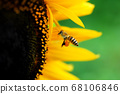 꽃과 벌 68106846