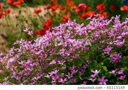 꽃,부안군,전북 68113189