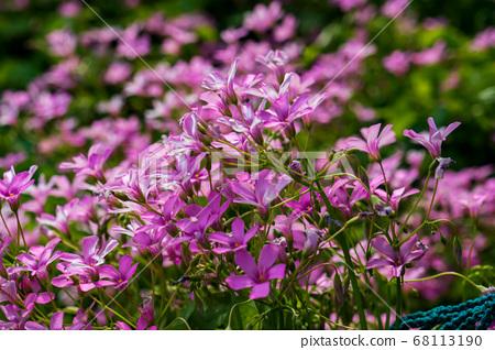 꽃,부안군,전북 68113190