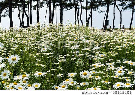꽃,부안군,전북 68113201