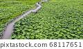 利川市,城城面,城河水庫,無人機攝影,蓮花館,蓮花田,橋路 68117651