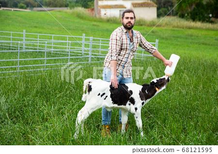 Farmer feeding calf from bottle 68121595