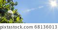 Banner of a large, creamy white southern magnolia Magnolia Grandiflora flower. 68136013