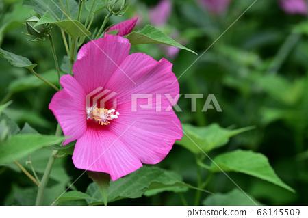 꽃 68145509