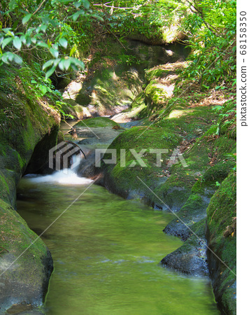 Moss growing on the rock 68158350