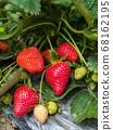 草莓 68162195