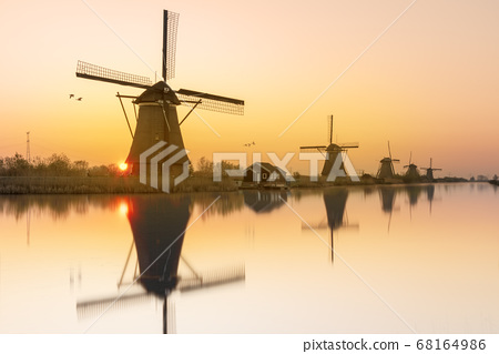 Geese flying on a typical Dutch rural landscape 68164986