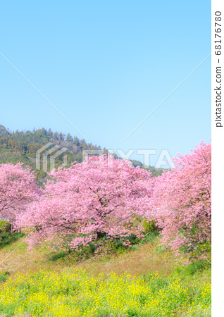 미나미 이즈 정 · 下賀茂의 카와 벚꽃 (소프트 포커스) 68176780