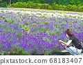 Woman taking pictures in a lavender field 68183407