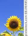 [Summer image] Sunflower in full bloom against the blue sky 68196485