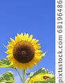 [Summer image] Sunflower in full bloom against the blue sky 68196486