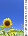 [Summer image] Sunflower in full bloom against the blue sky 68196488