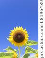 [Summer image] Sunflower in full bloom against the blue sky 68196489