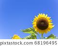 [Summer image] Sunflower in full bloom against the blue sky 68196495
