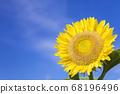 [Summer image] Sunflower in full bloom against the blue sky 68196496